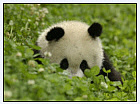 China-  home of the Panda.